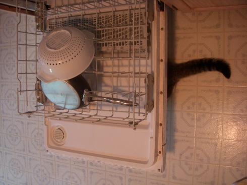 Dishwashing Kitty